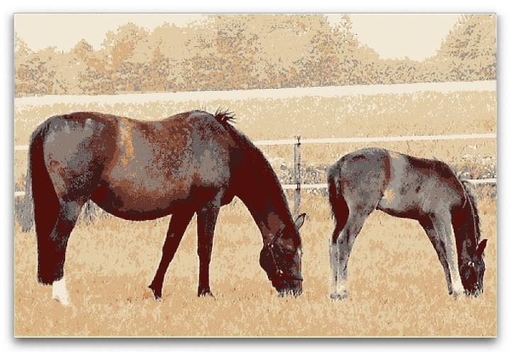 Tämän kuvan alt-attribuutti on tyhjä; Tiedoston nimi on hester.jpg